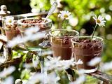 Schokopudding-Topfpflanzen Rezept