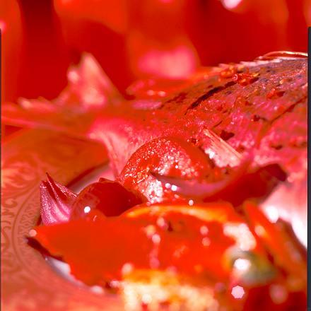 Goldbrasse auf Tomaten und roter Paprika Rezept