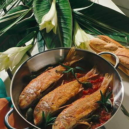 Rotbarben auf Tomatensoße Rezept